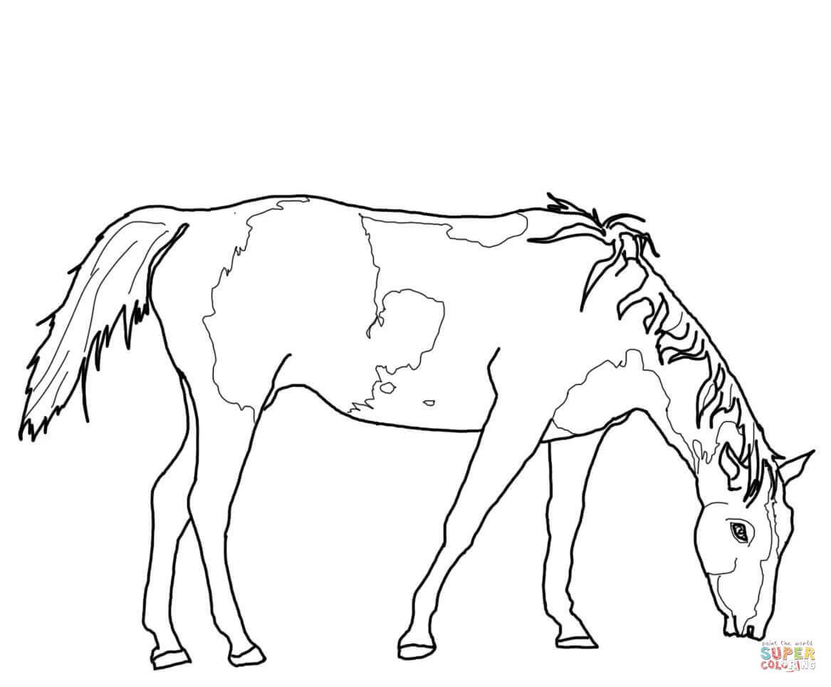 Ausmalbild Grasendes Paint Horse