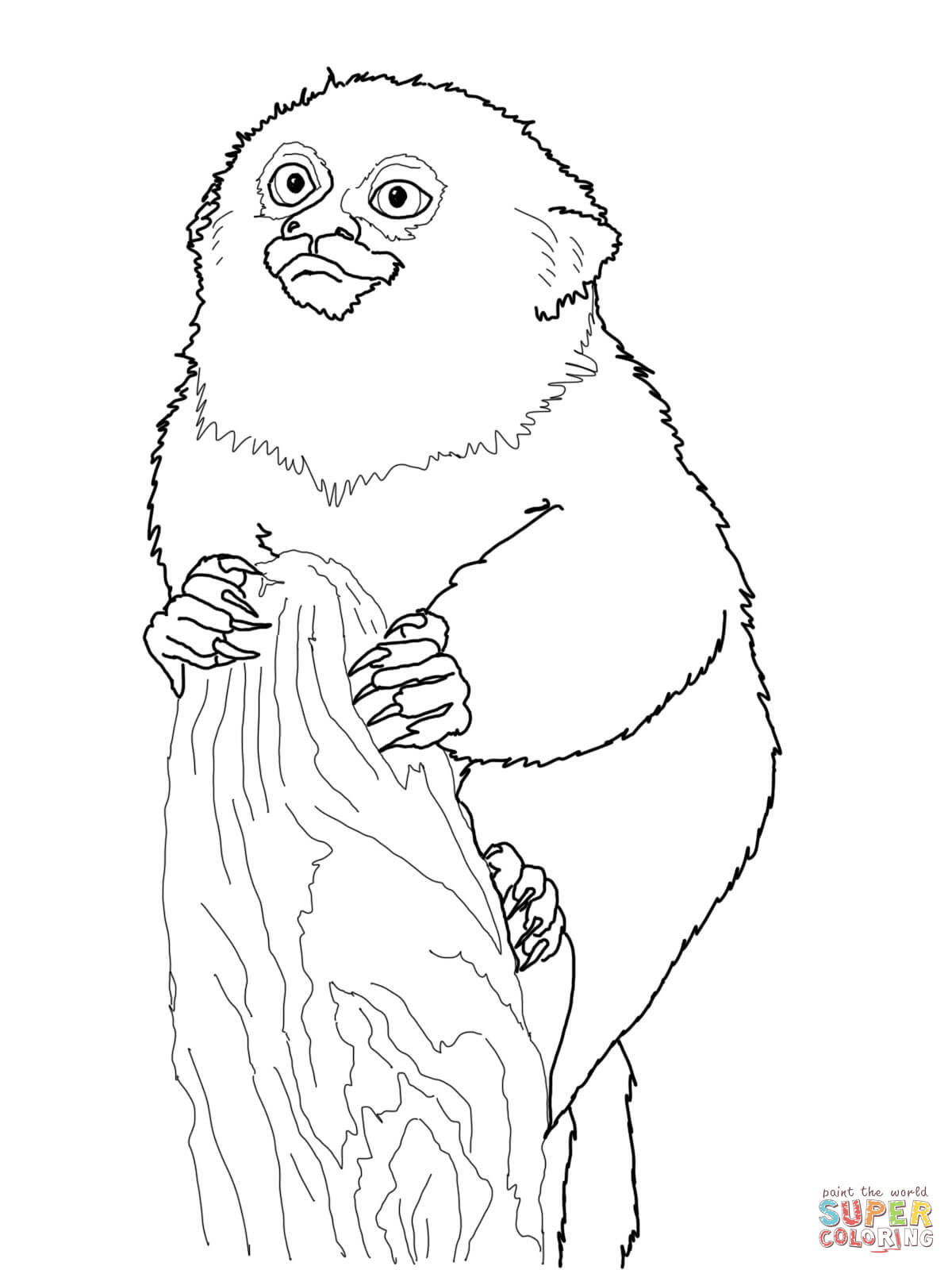 Coloring Pages Of A Tamarin Coloring Pages