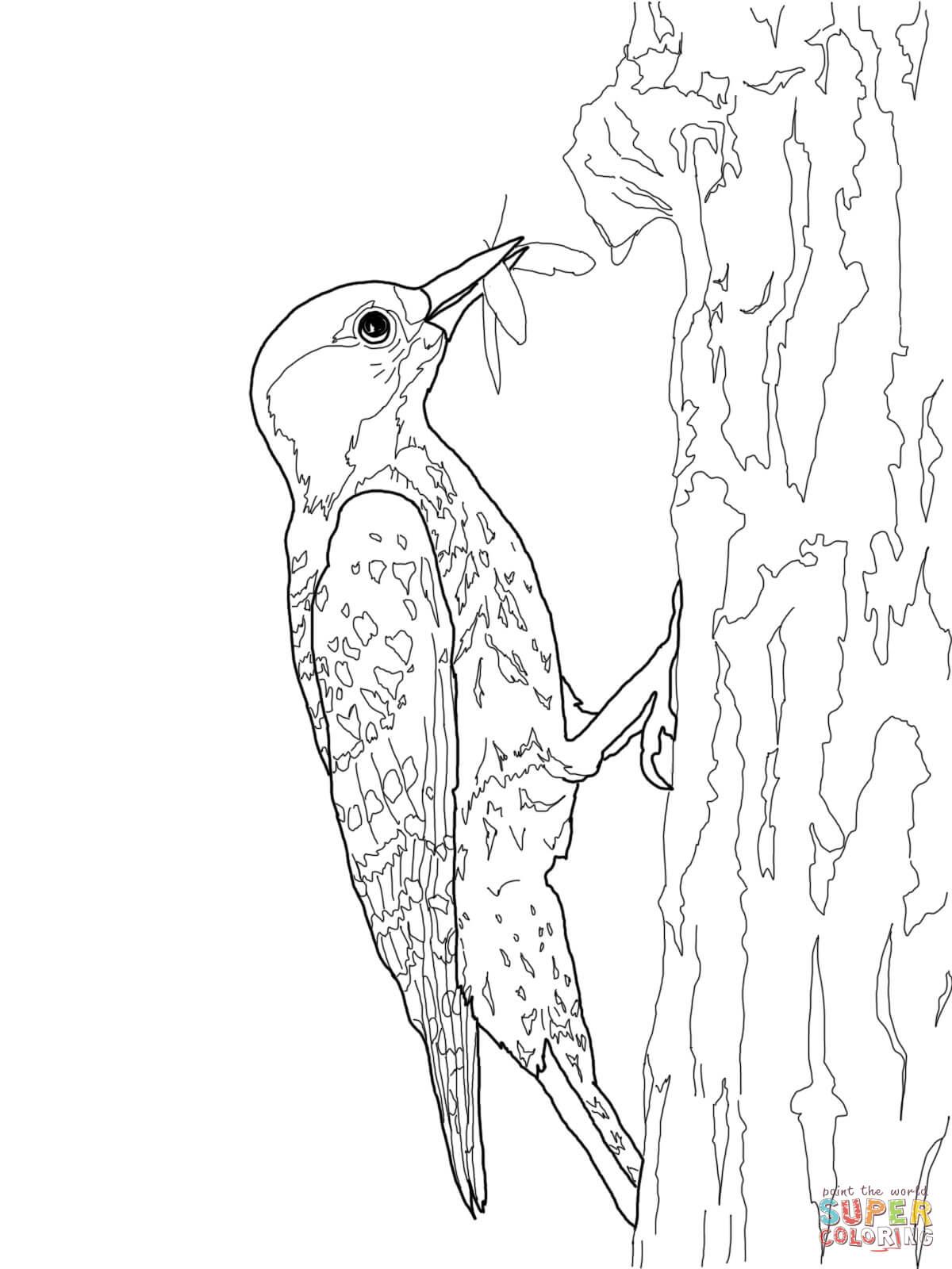 Desenho de Pica-pau de crista vermelha para colorir