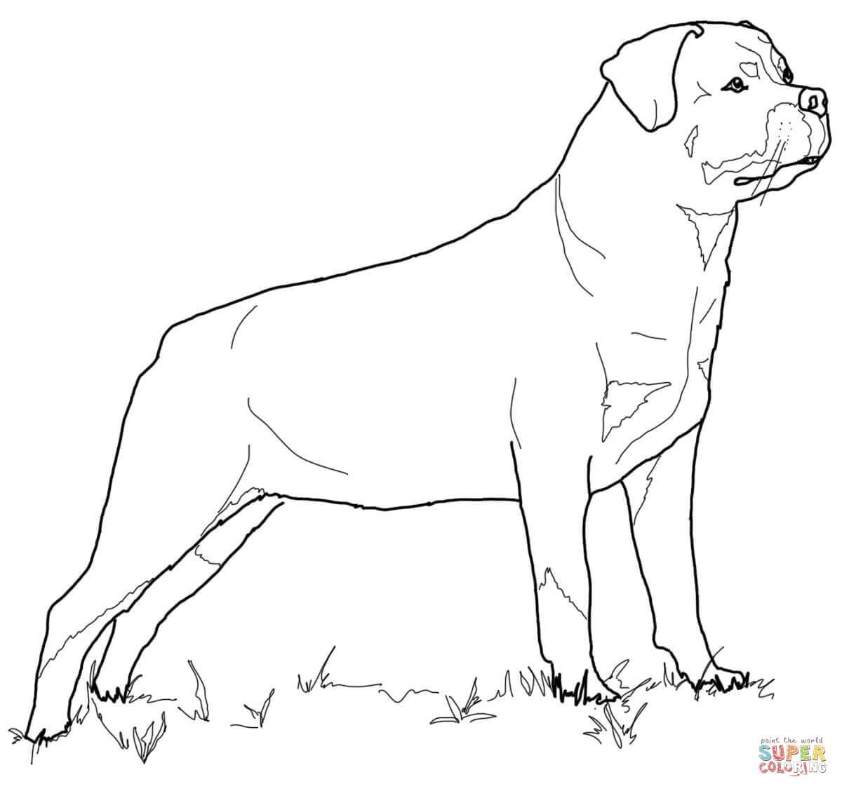 Black Doberman Pinscher Drawing