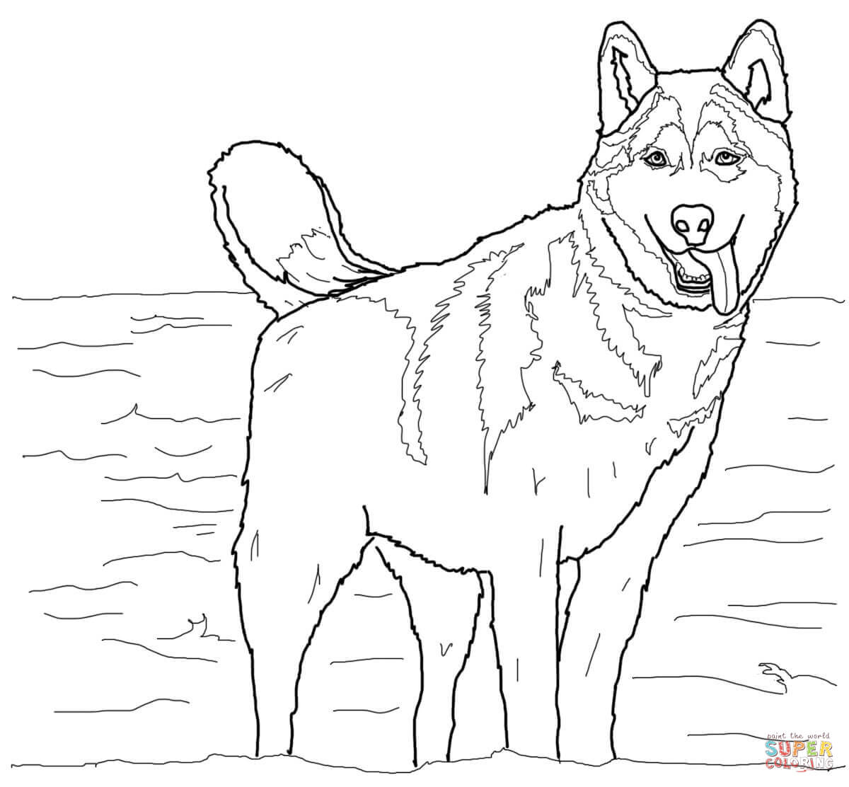 Ausmalbild Siberian Husky Ausmalbilder kostenlos zum