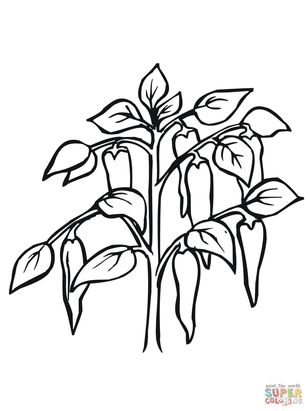 Chili Pepper Plant Coloring Page