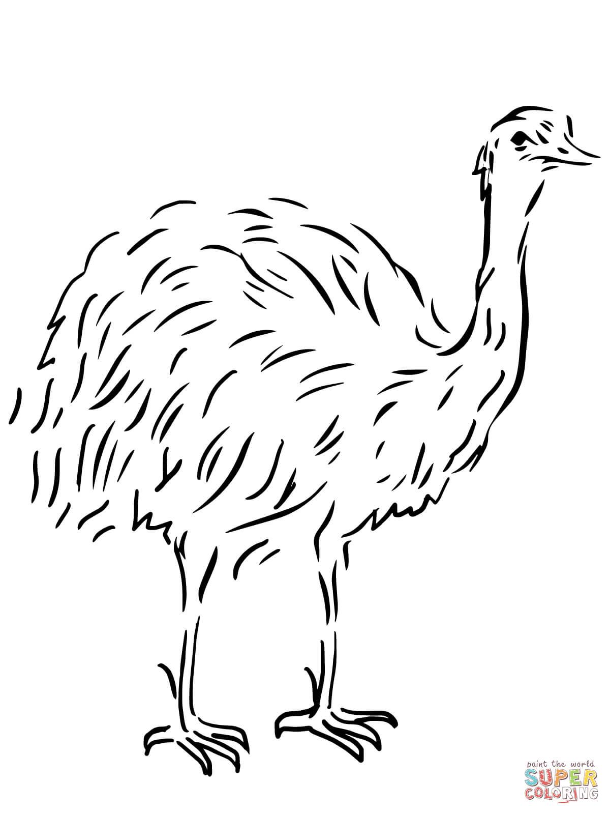 Emu Flightless Bird Coloring Page