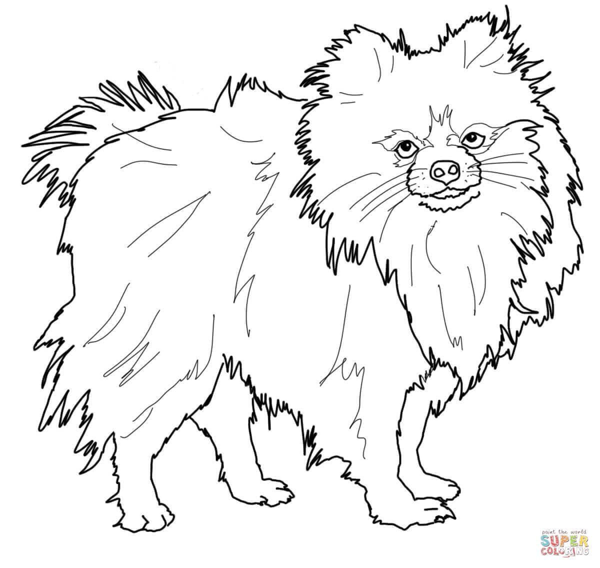 Pomeranian Dog Coloring Page
