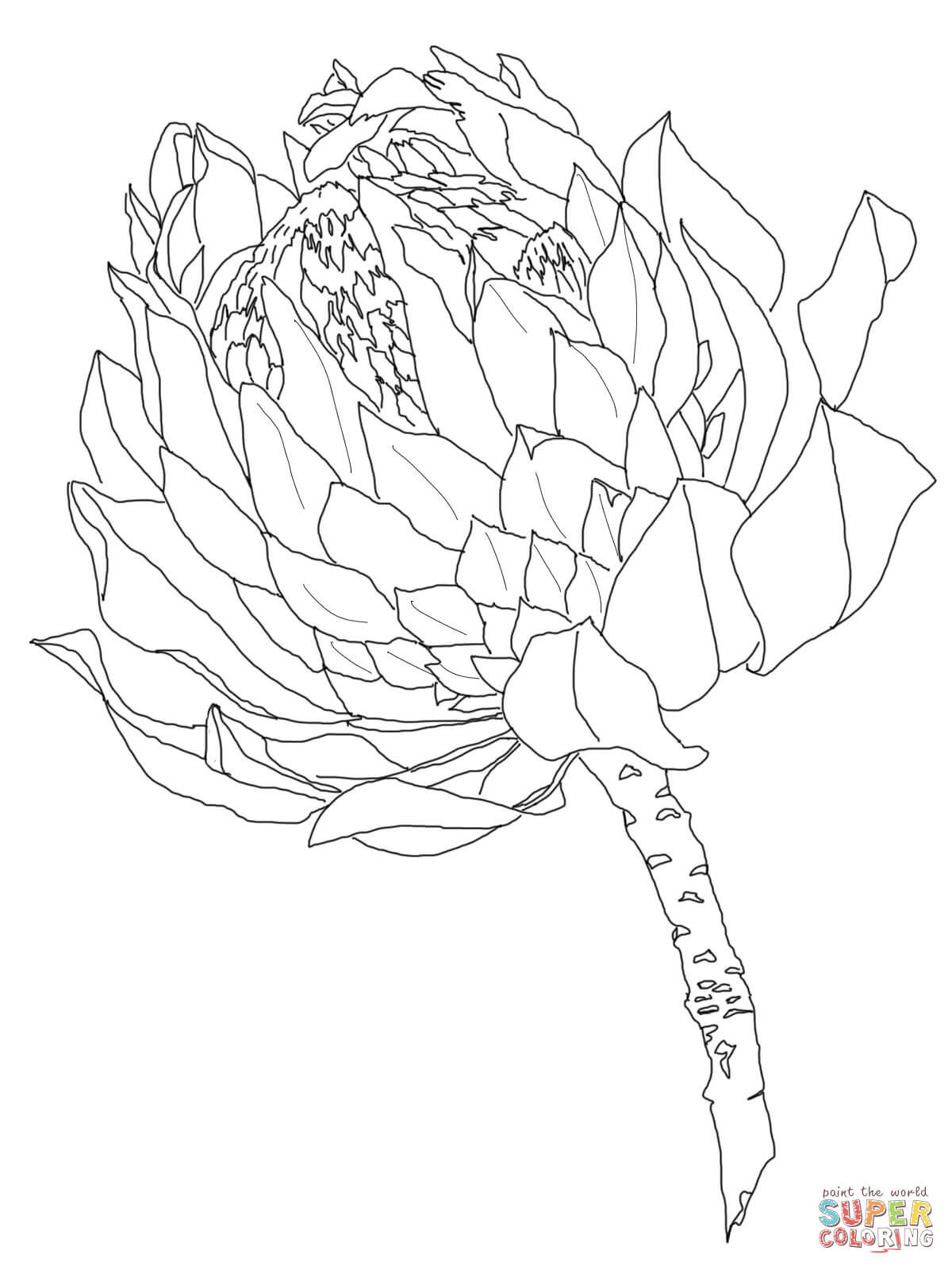 Protea Coloring Page