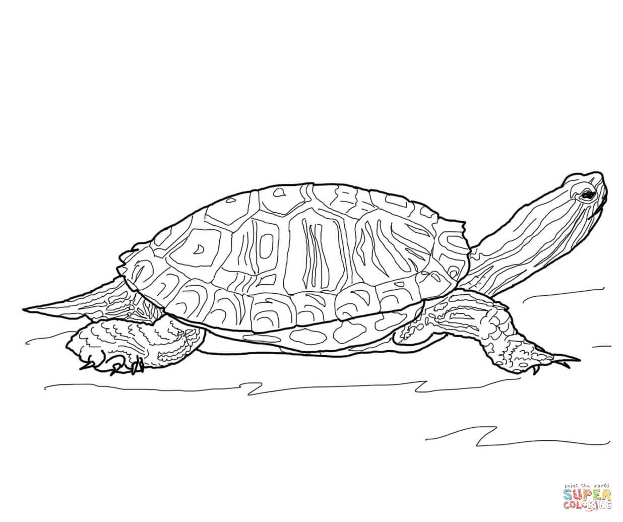 Red Eared Slider Turtle Coloring Page