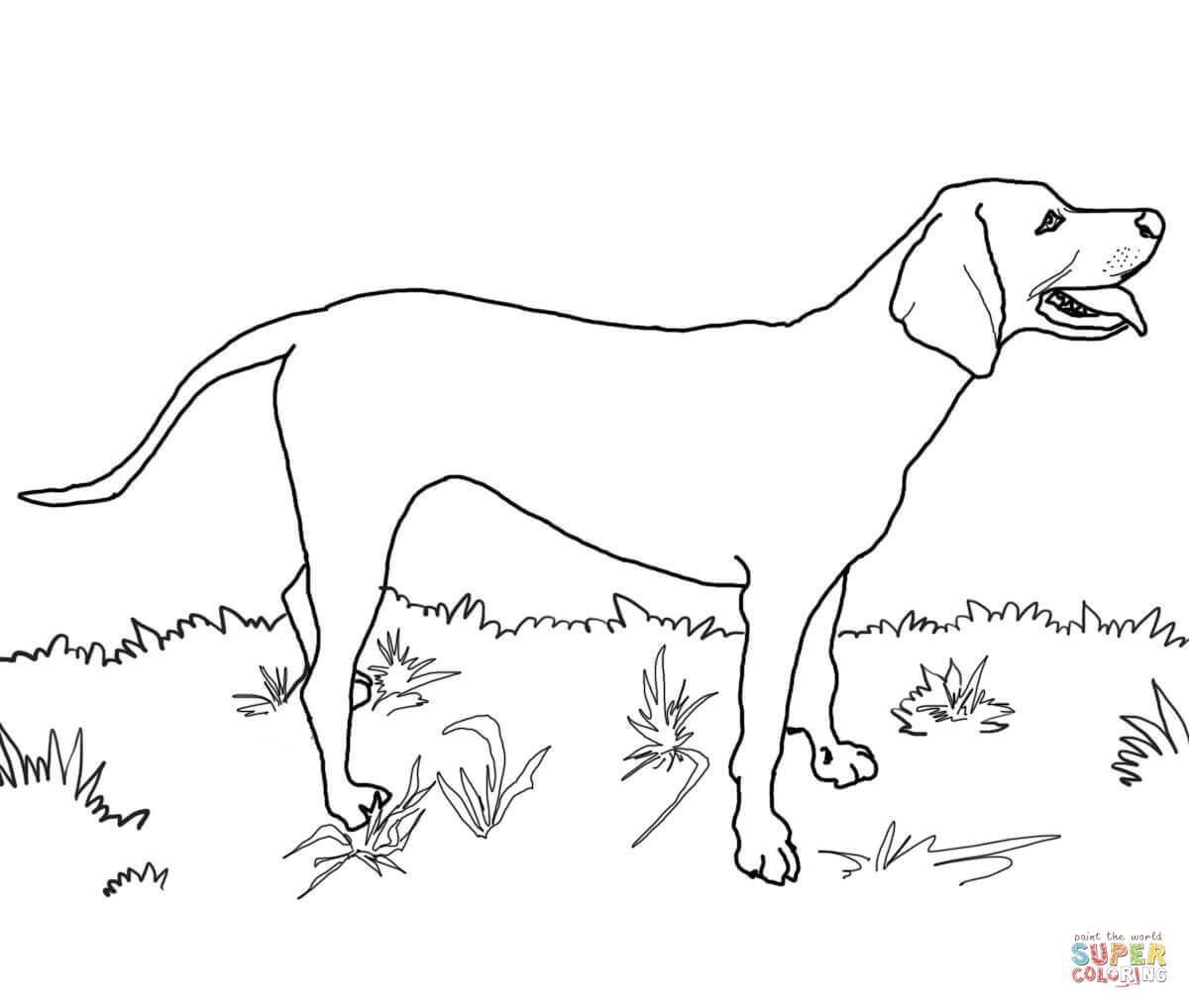 Redbone Coonhound Coloring Page