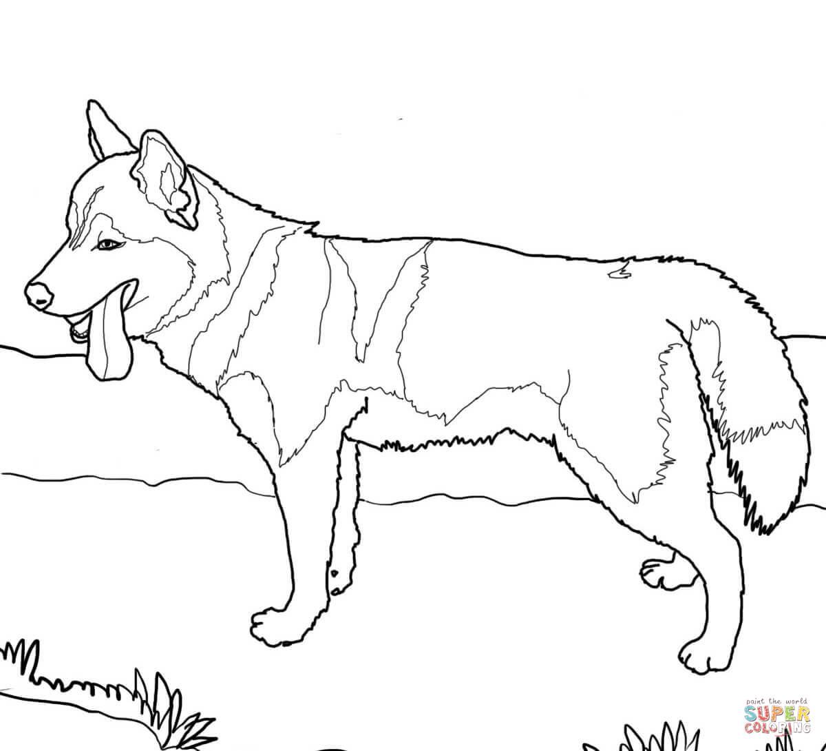 Siberian Husky Dog Coloring Page