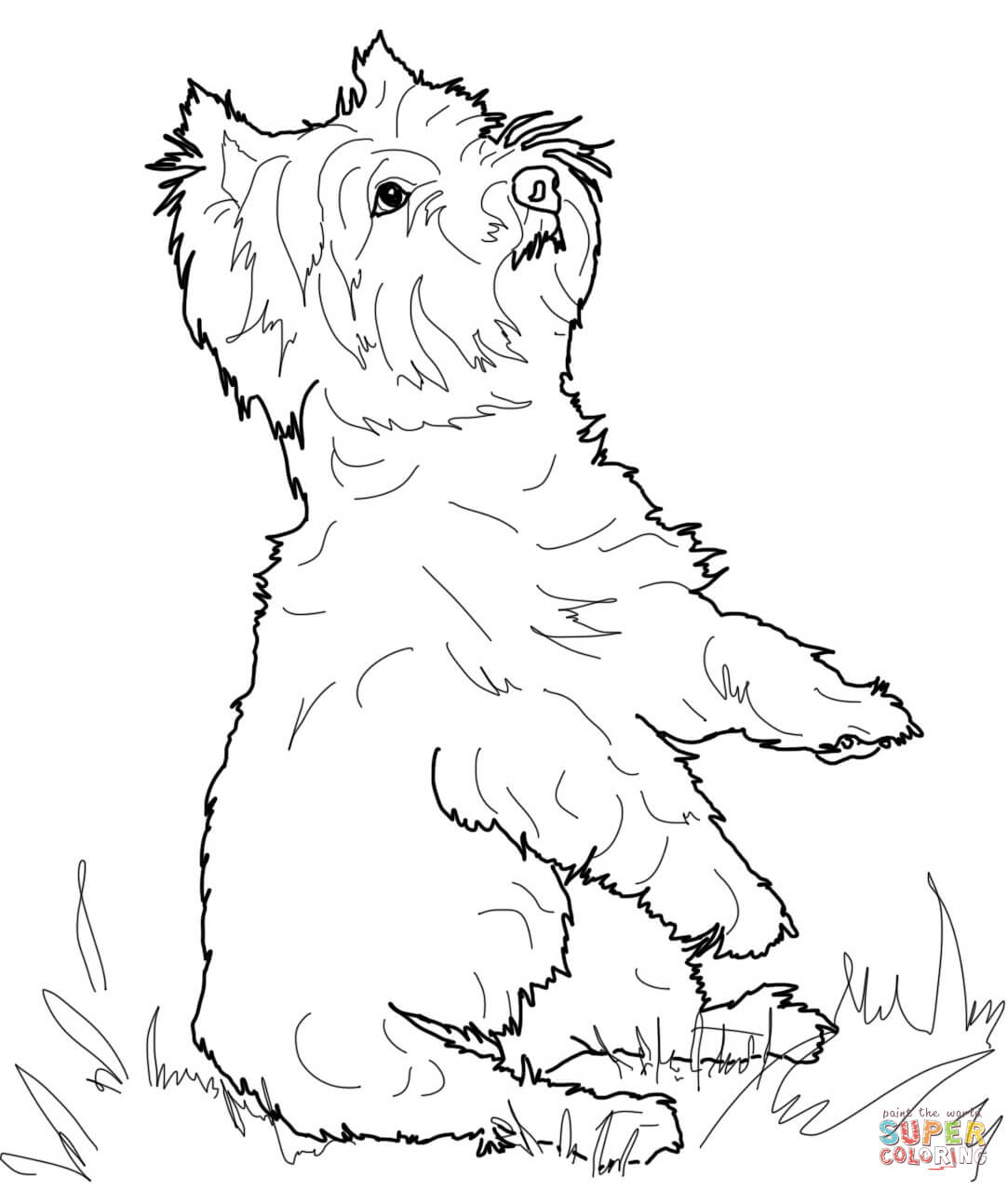 Yorkshire Terrier Coloring Page Free Printable Coloring Pages
