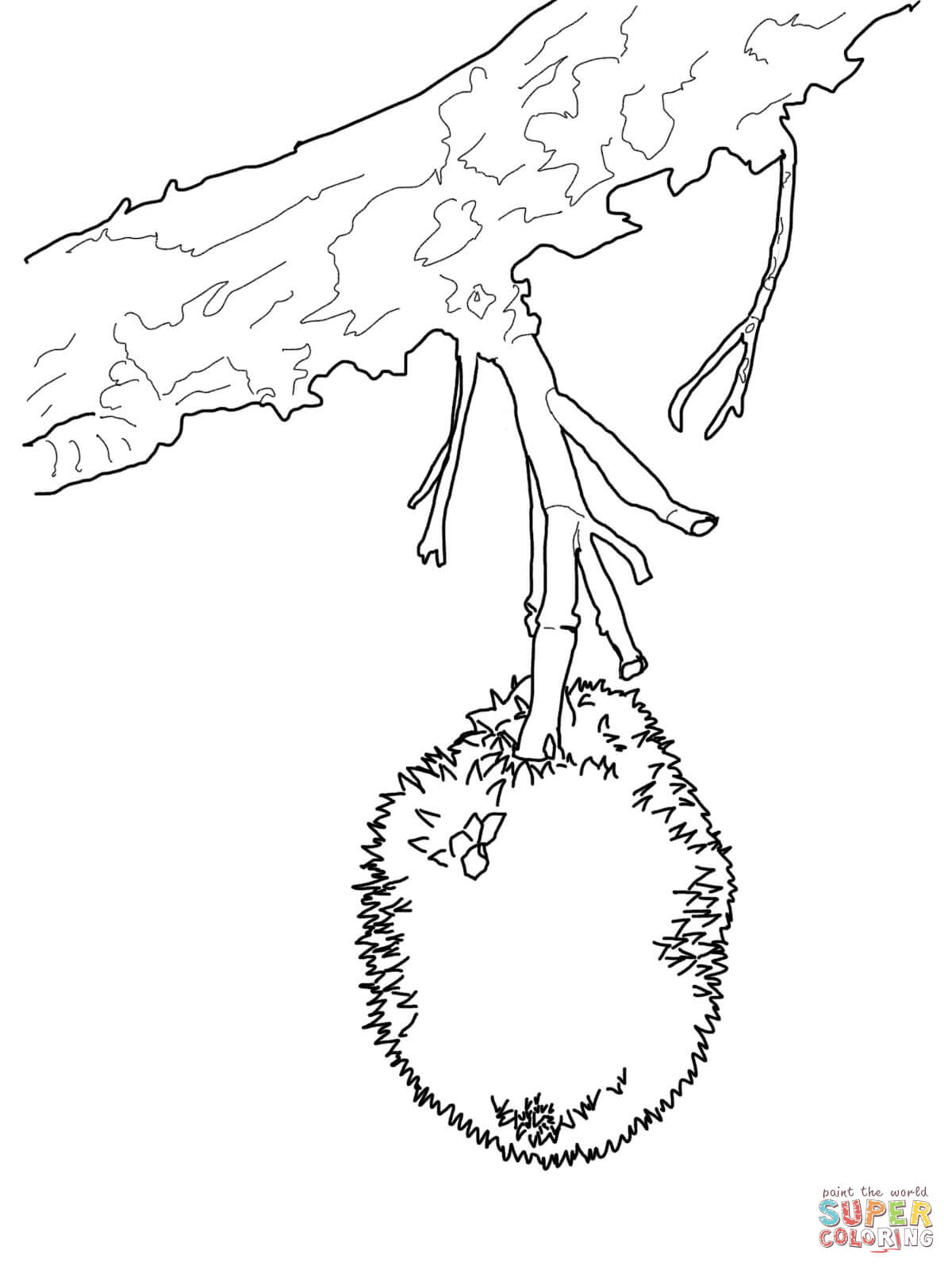 Durian On Tree Coloring Page