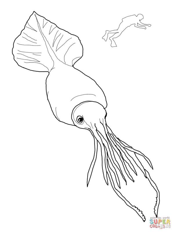 squid coloring page preschool # 19