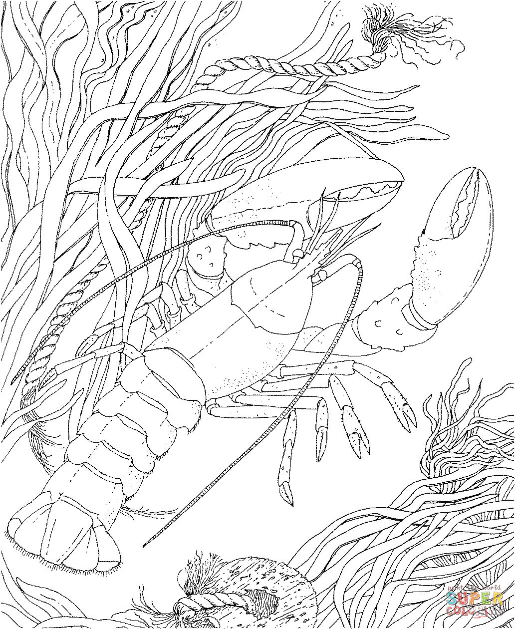 Crawdad Crayfish Coloring Page Free Printable Coloring Pages