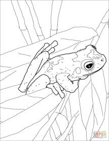 Green Eyed Tree Frog coloring page Free Printable