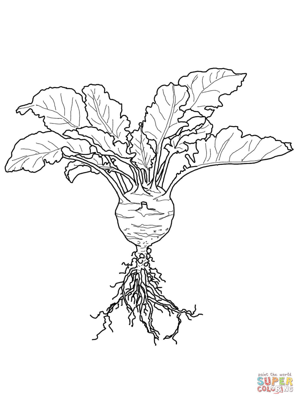 Underground Plant Roots Drawing Sketch Coloring Page
