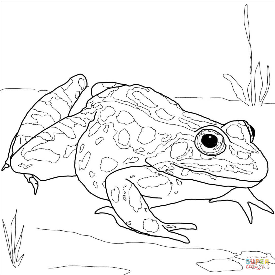 Rainforest Poison Dart Frog Coloring Page Coloring Pages