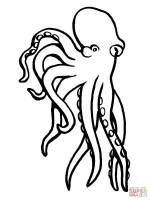 Octopus Mollusc coloring page   Free Printable Coloring Pages