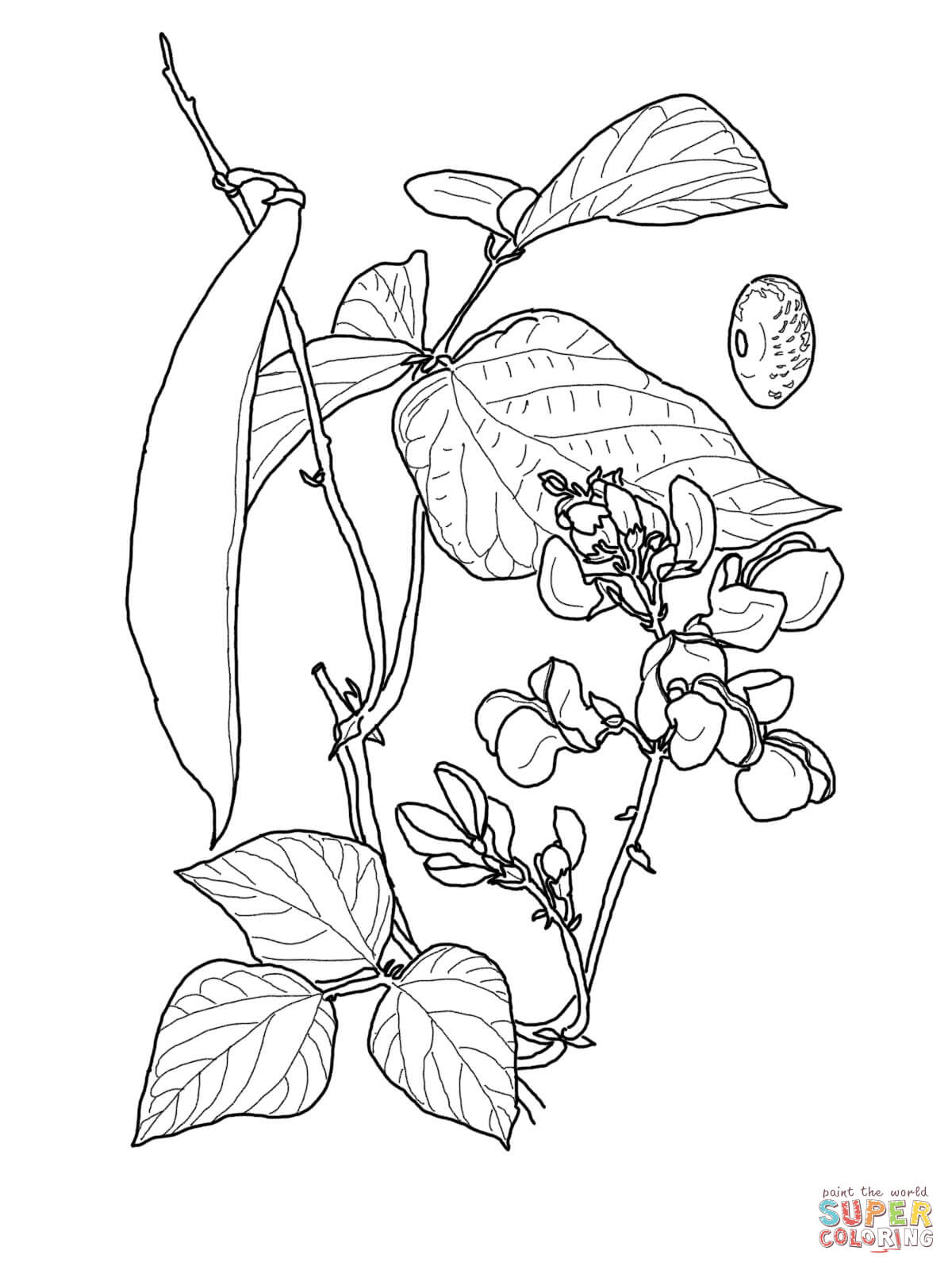Runner Bean Coloring Page