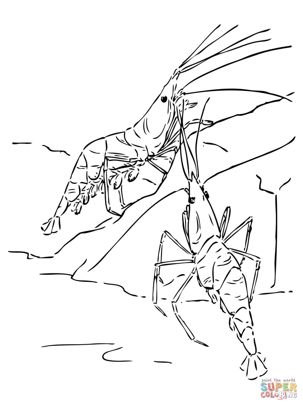 Pin Shrimp Colouring Pictures
