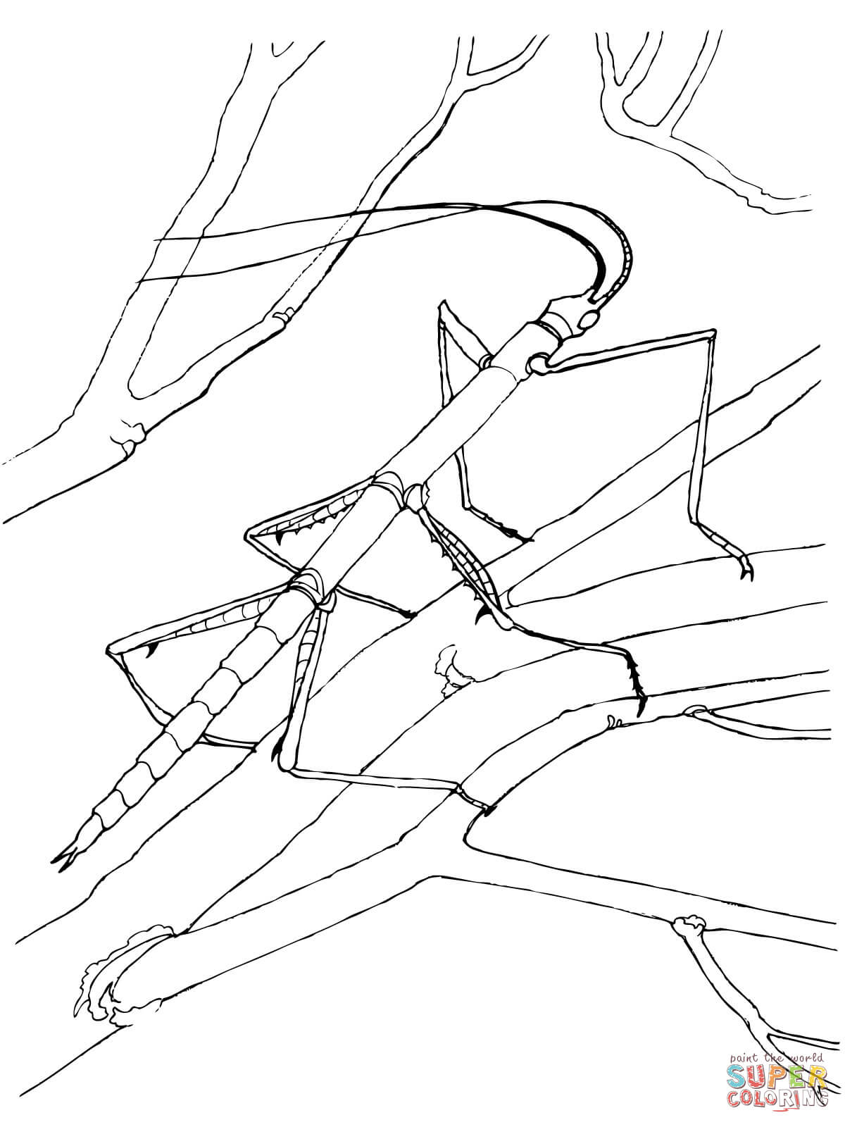 Walking Stick Bug Coloring Page