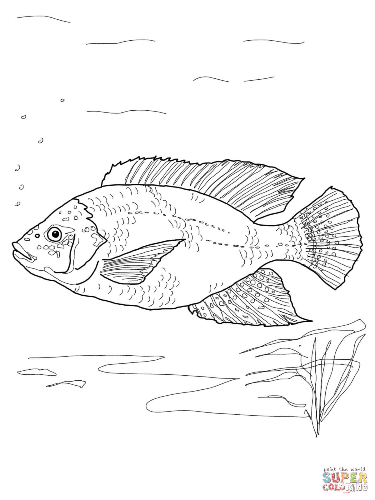 Blue Tilapia Coloring Page Free Printable Coloring Pages