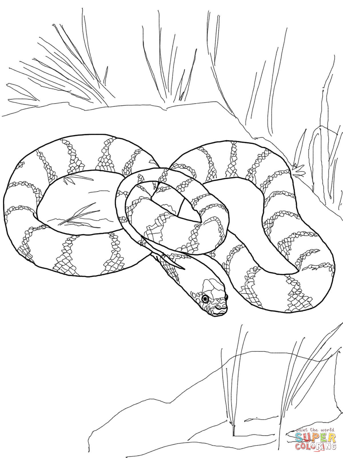 Disegno Di Lampropeltis Getula Californiae Da Colorare