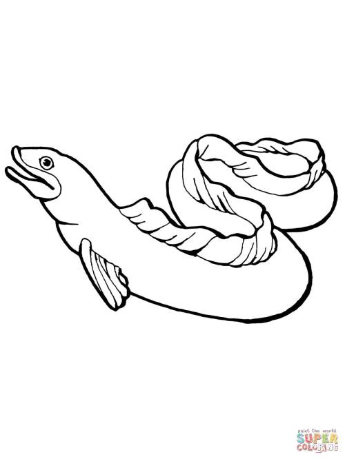 small resolution of eel coloring page free printable coloring pagesclick the eel coloring pages