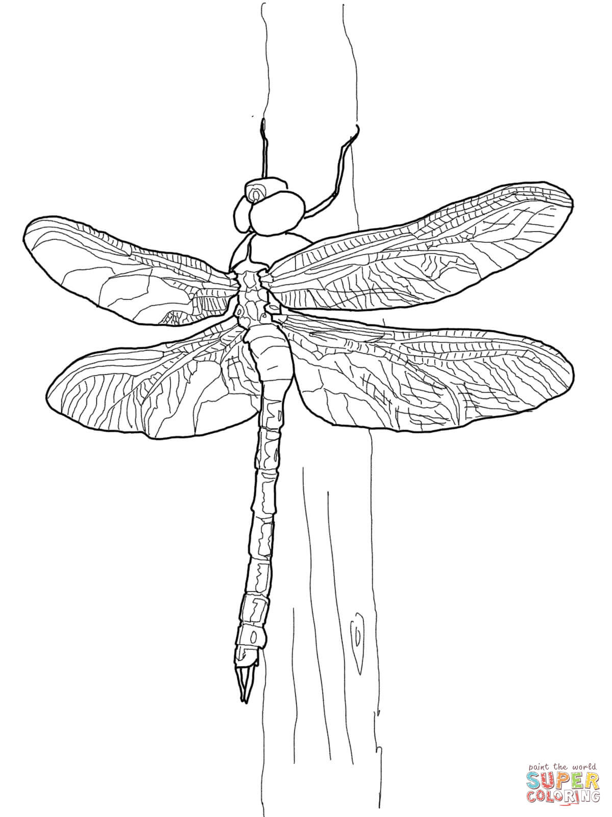 Green Darner Dragonfly Coloring Page