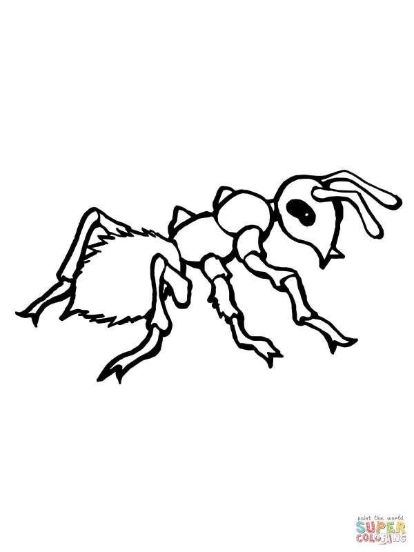 realistic ant coloring page free