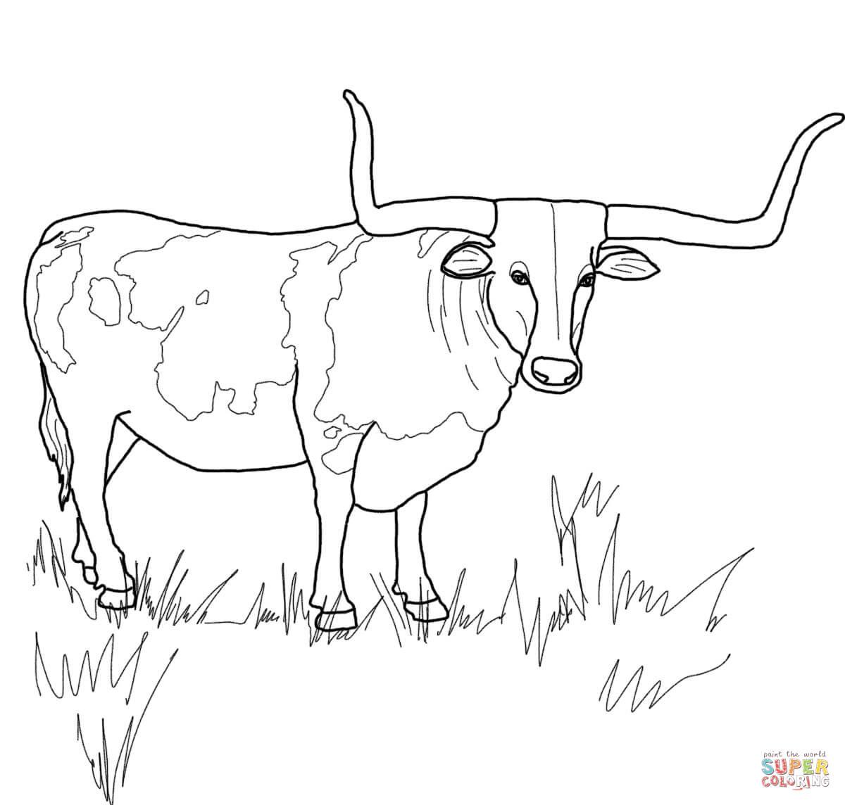 Texas Longhorn Steer Coloring Page
