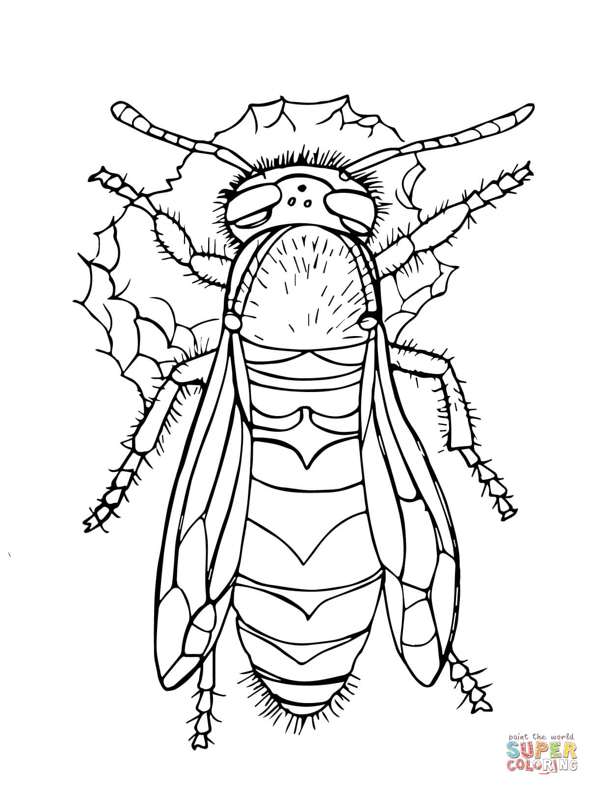 Western Yellow Jacket Coloring Page