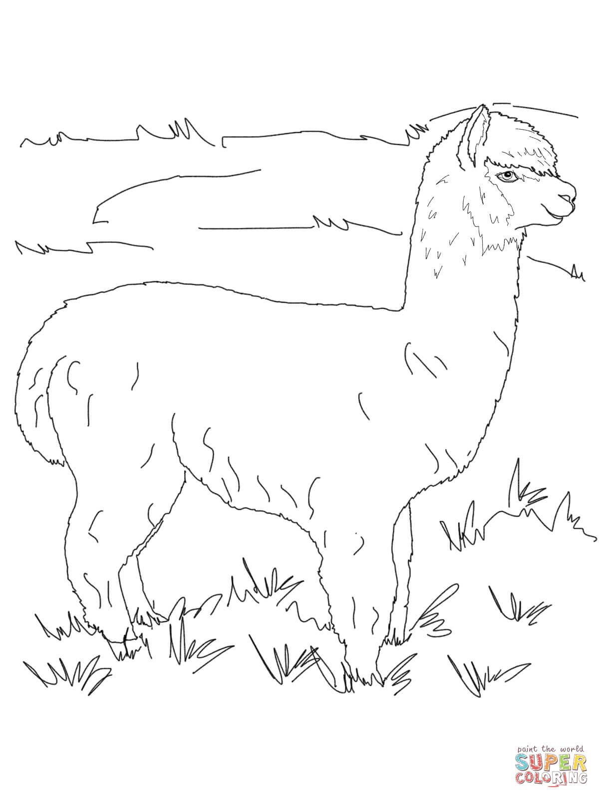 Ausmalbild Alpaka auf der Wiese Ausmalbilder kostenlos