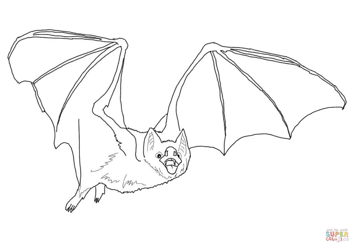 Common Vampire Bat Coloring Page