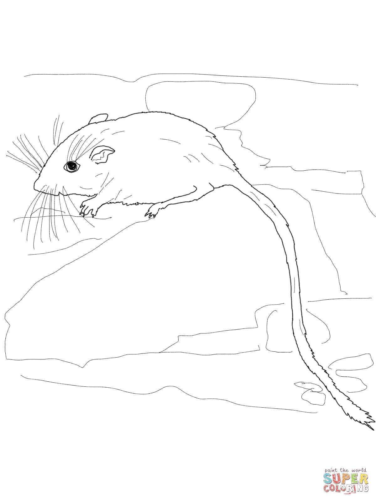 Desert Pocket Mouse Coloring Page