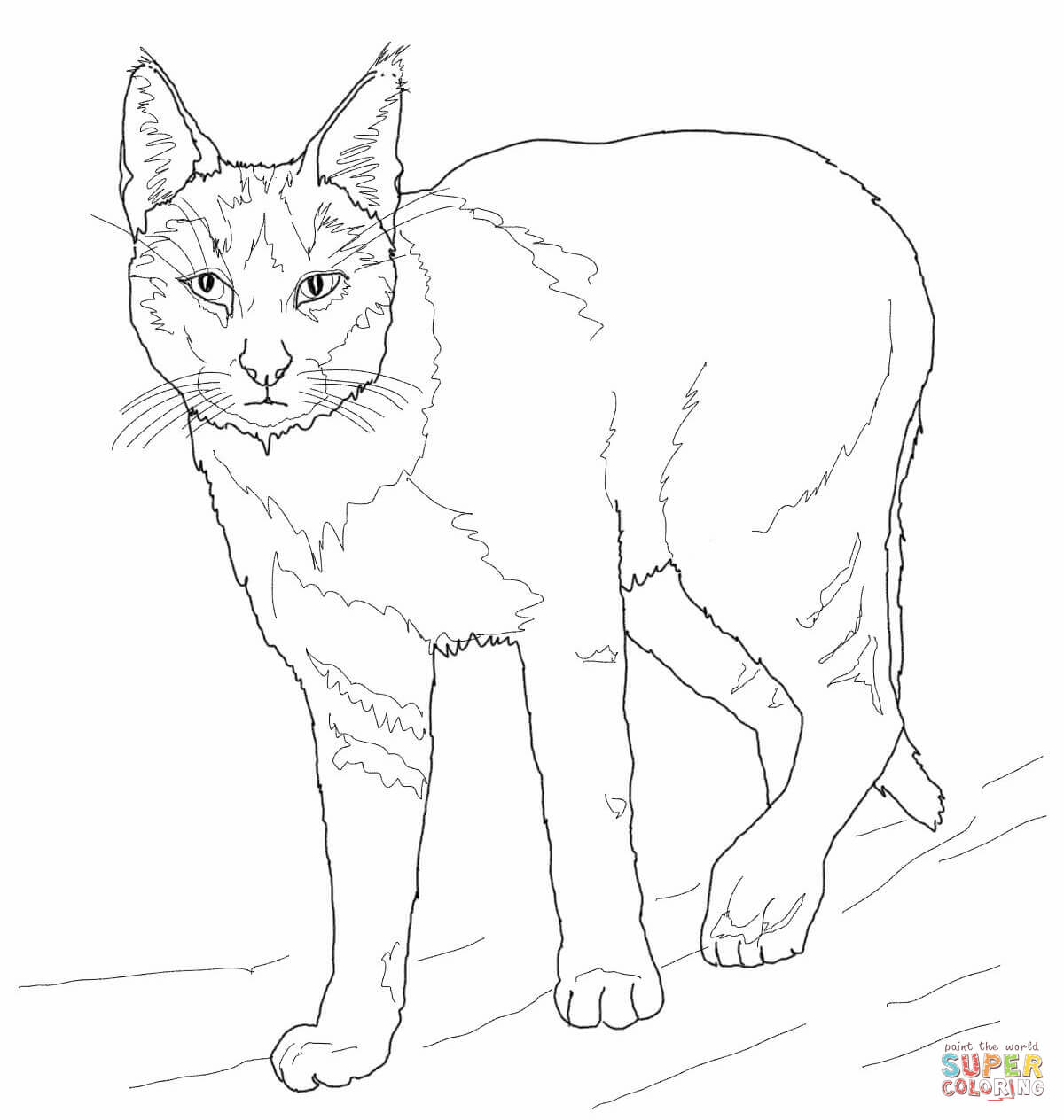 Related Keywords & Suggestions for jungle cat drawing