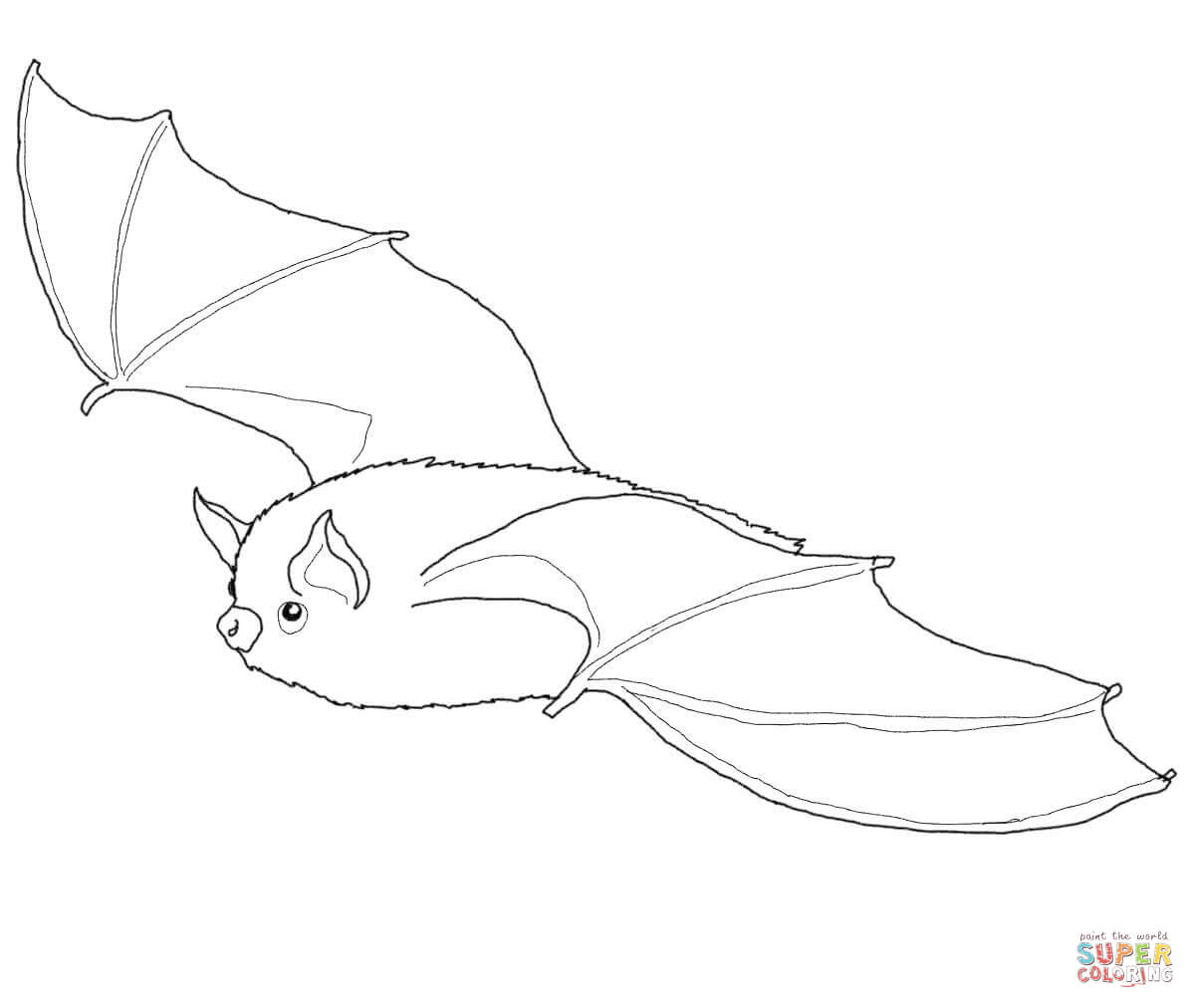 Little Brown Bat Coloring Page