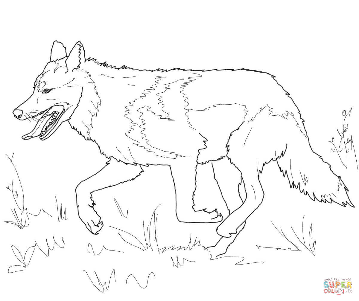 Mexican Grey Wolf Coloring Page Coloring Pages