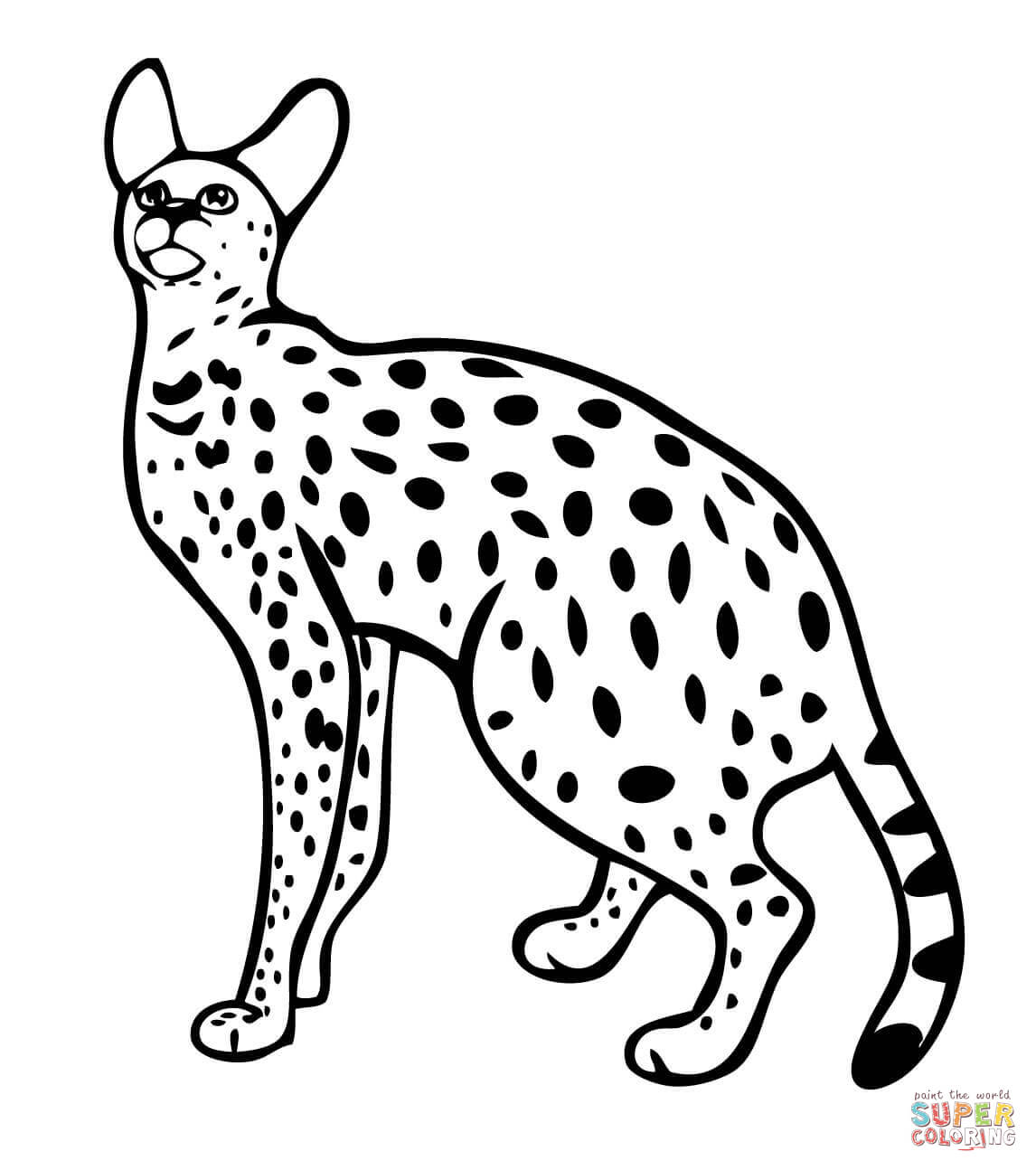Related Keywords & Suggestions for Serval Wildcat