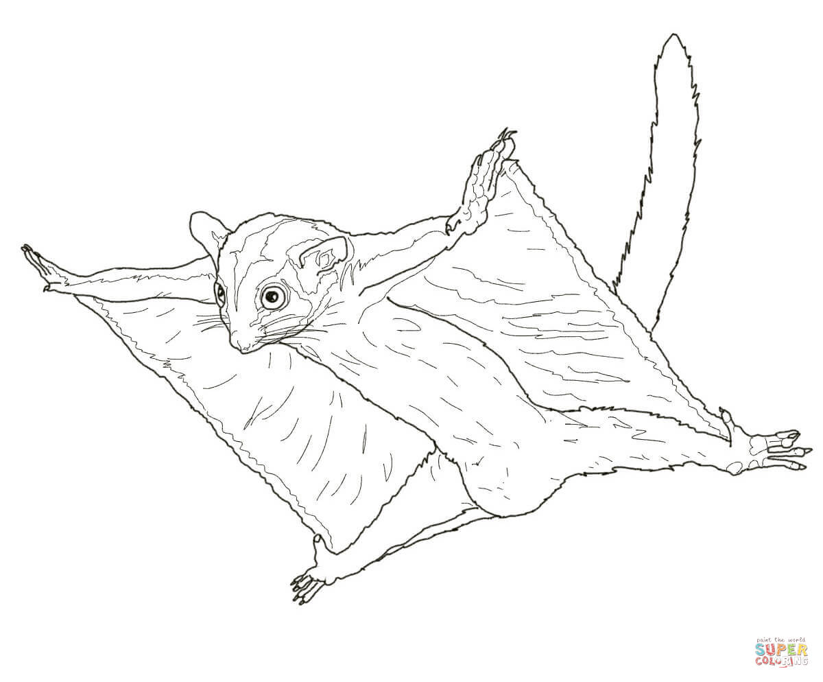 Sugar Glider Flying Coloring Page
