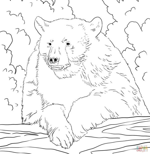 black bear coloring page # 8