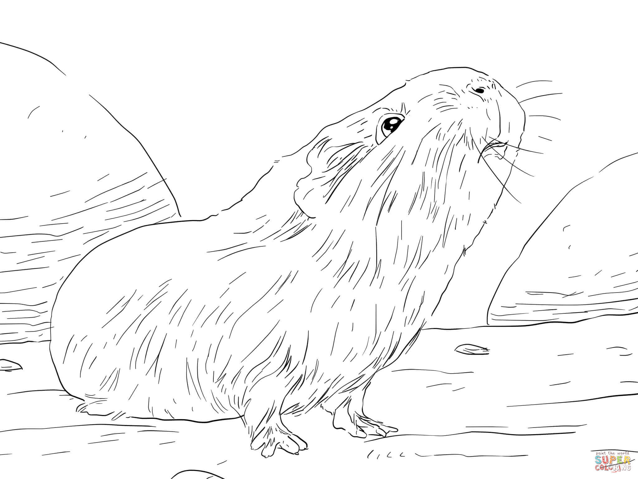Curious Guinea Pig Coloring Page