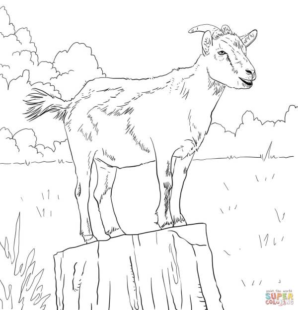 Realistic Domestic Goat coloring page Free Printable