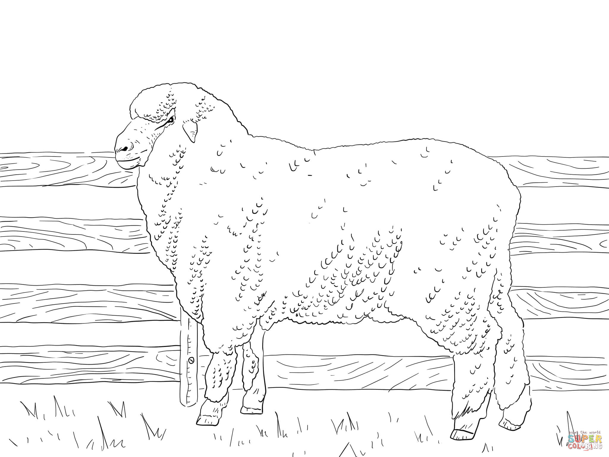 Merino Sheep Coloring Page
