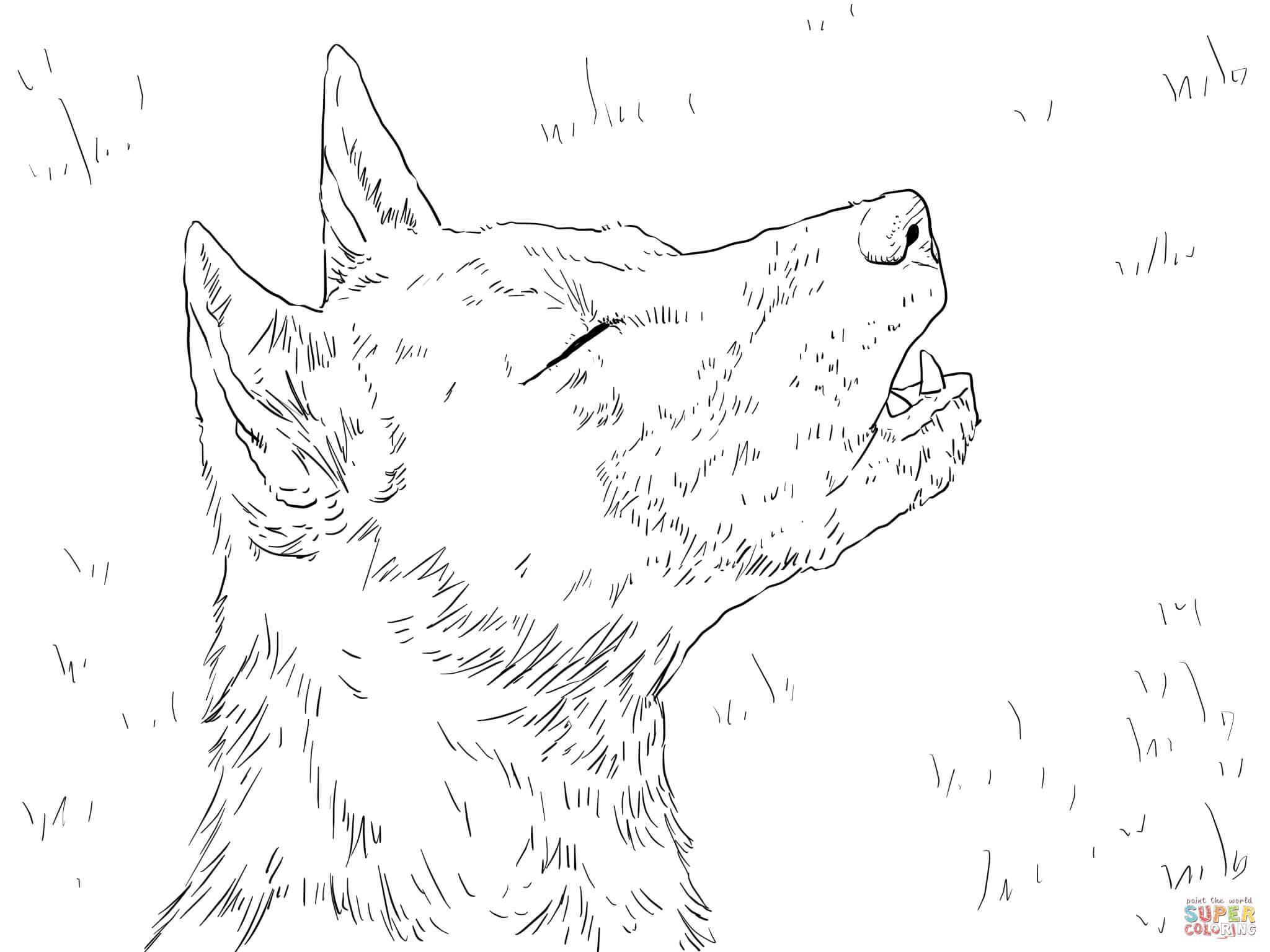 Portratt Av Nya Guineas Sjungande Hund M Larbok