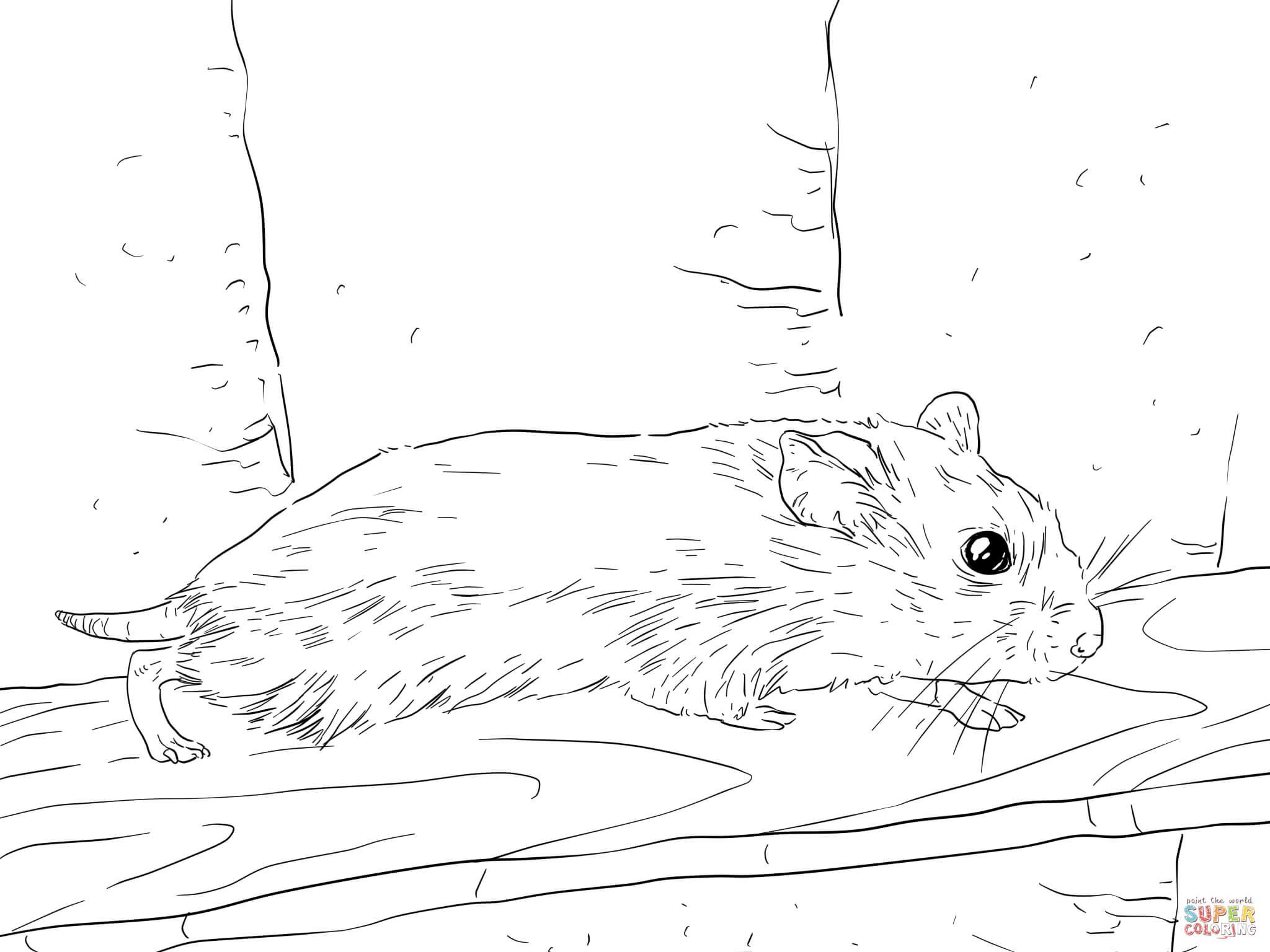 Dwarfe Hamsters
