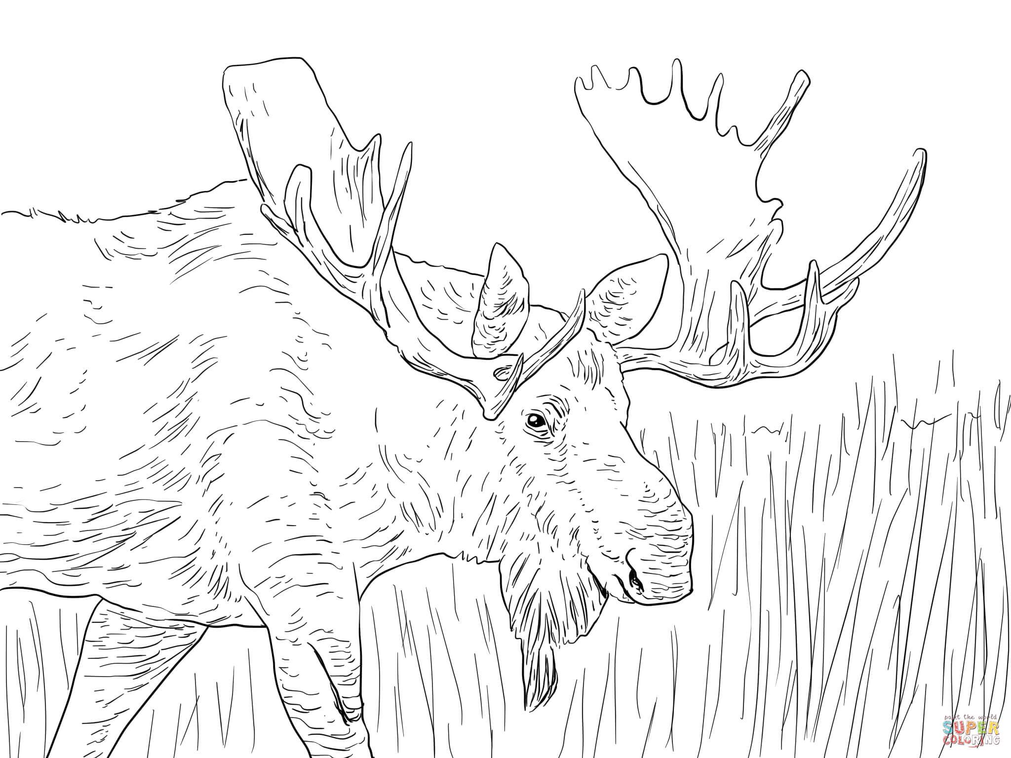 35 Elch Zum Ausmalen - Besten Bilder von ausmalbilder