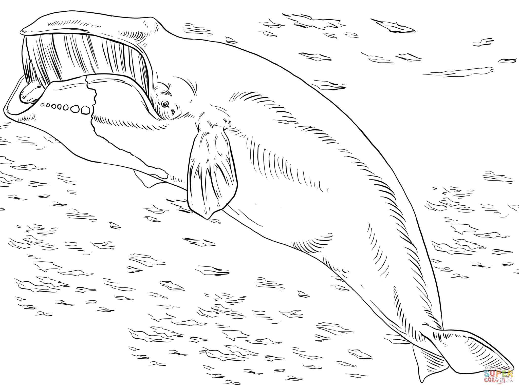 Bowhead Or Greenland Right Whale Coloring Page