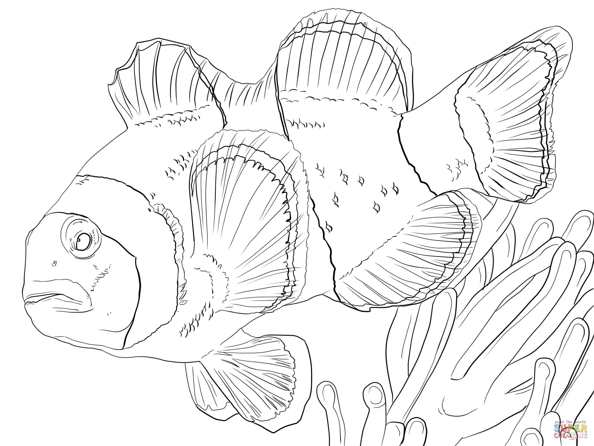 Kleurplaat Piranha Ausmalbild Zwei Hechte Ausmalbilder