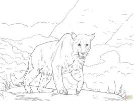 Crouching Puma coloring page   Free Printable Coloring Pages