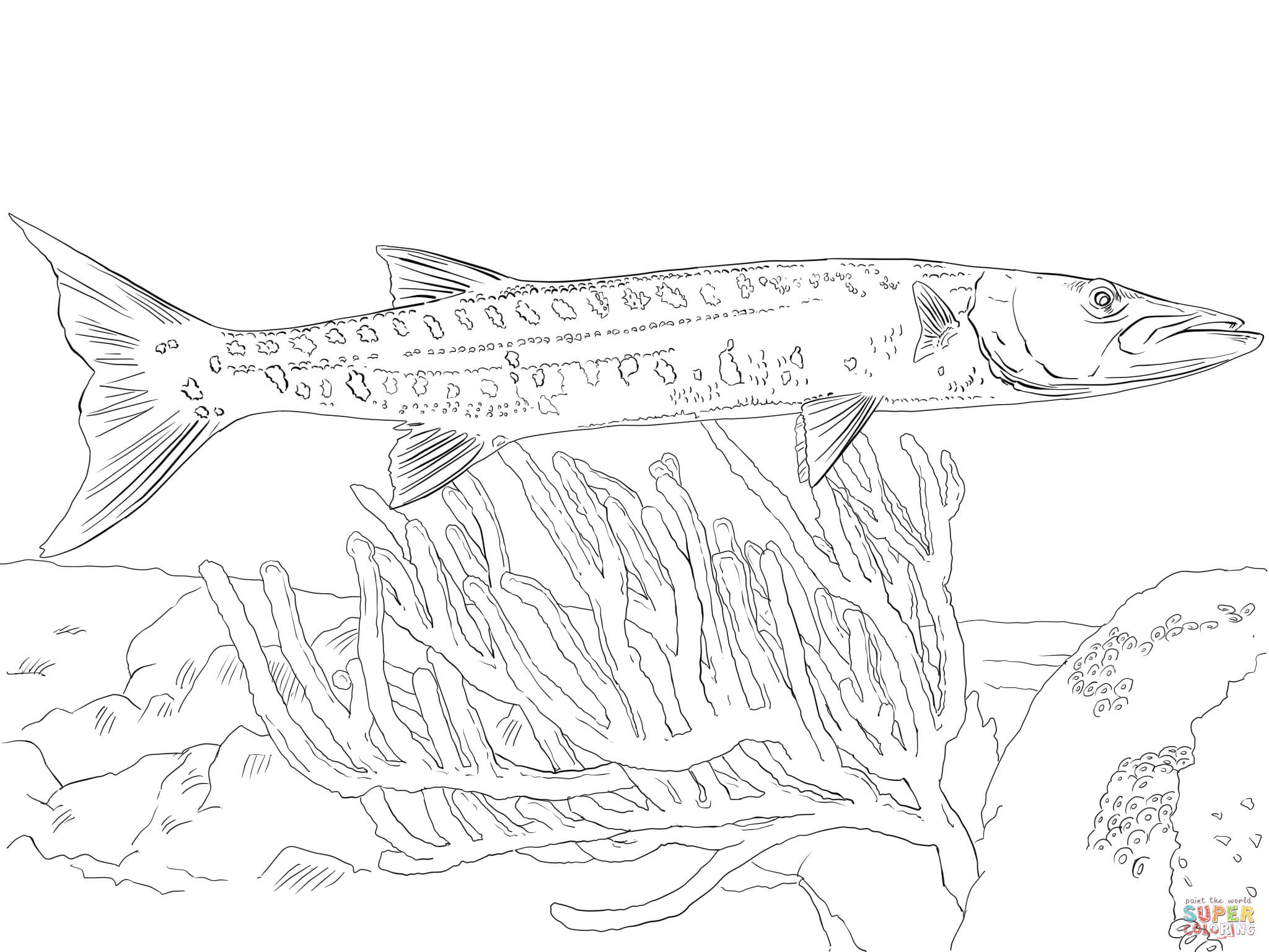 Great Barracuda Coloring Page Free Printable Coloring Pages