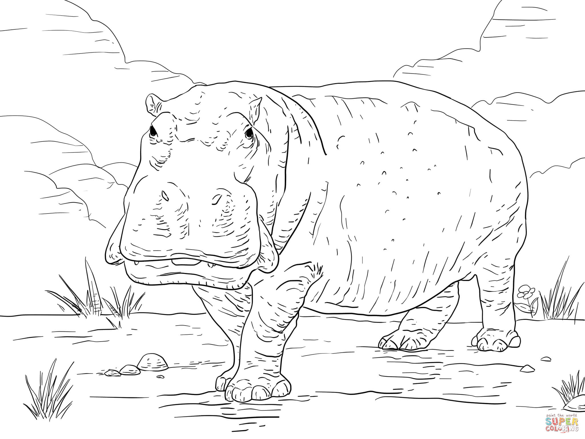 Hippo Coloring Page Free Printable Coloring Pages